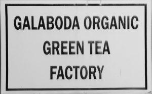 lucky-family-travel-blog-sri-lanka-tea-factory