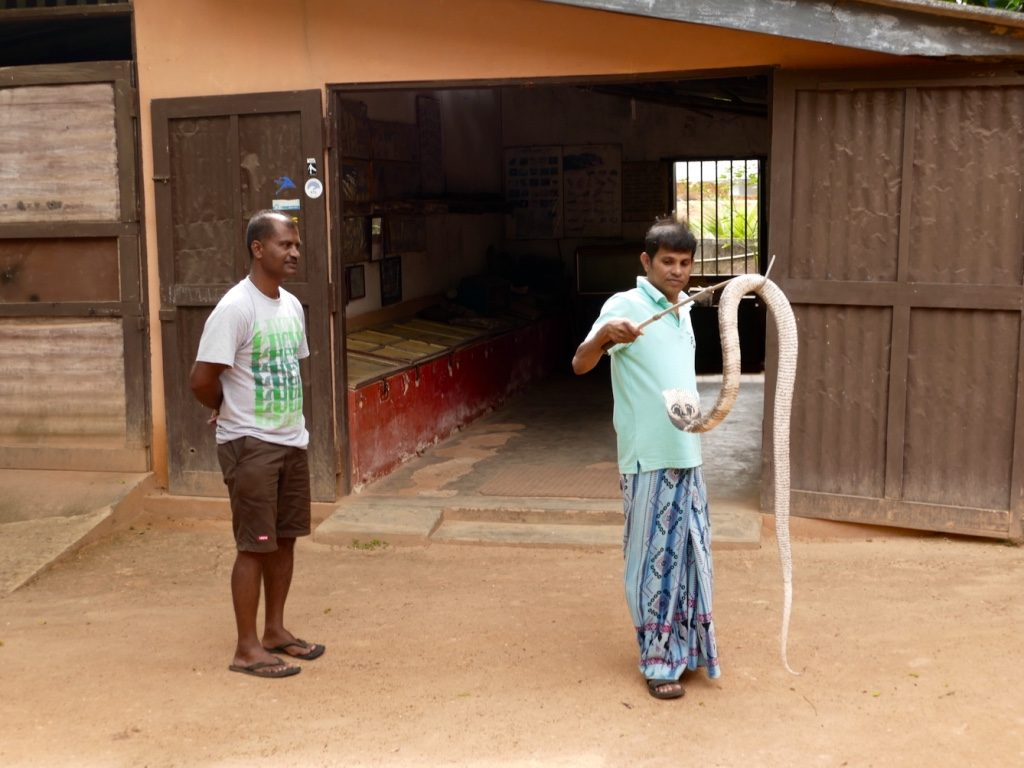 lucky-family-travel-blog-sri-lanka-snake-farm